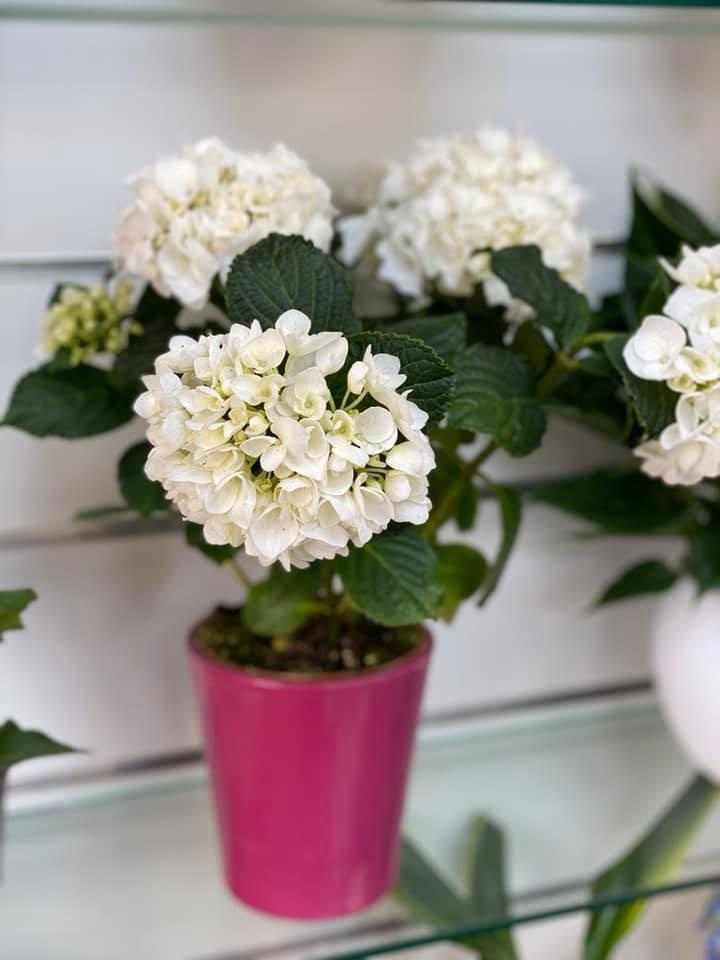 fleuriste-pertuis-composition-pertuis-fleurs-21