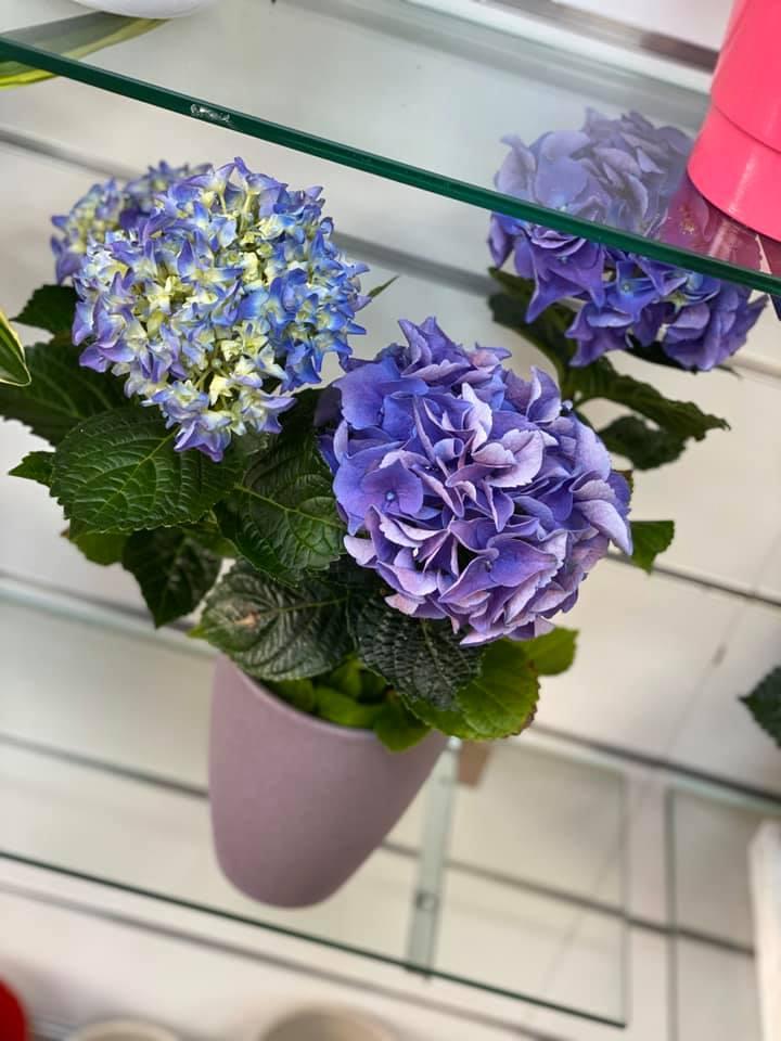 fleuriste-pertuis-composition-pertuis-fleurs-22